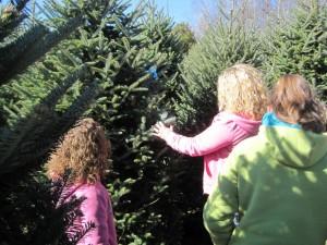 family choosing a Fraser fir