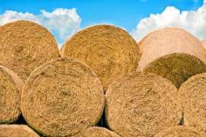 3124655-hay-bales-stacked-in-a-pile-with-blue-sky-above