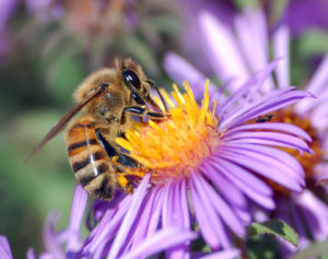 Cover photo for Celebrate National Honey Bee Day!