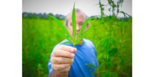 Cover photo for N.C. Welcomes First Hemp Harvest in Decades