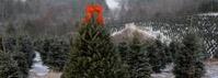 Christmastree farm