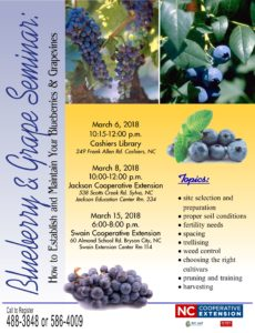 Cover photo for Managing Your Blueberry & Grape Vines