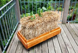 Cover photo for Thinking Outside the Box – Small Gardening Alternatives