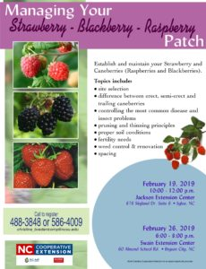 Cover photo for Managing Your Strawberry-Blackberry-Raspberry Patch