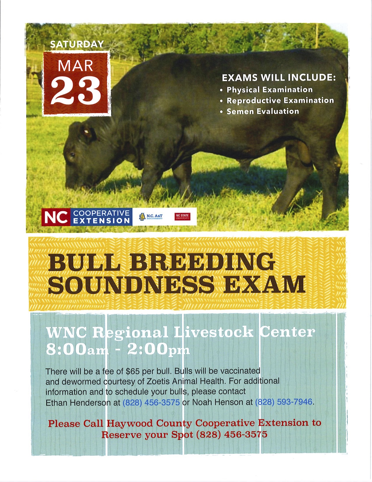 Bull breeding flyer
