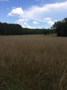Cover photo for 30 Acres Hay Land Available for Lease in Caldwell County
