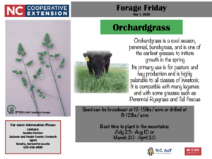 Cover photo for Forage Friday