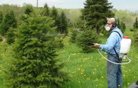 Man spraying tree