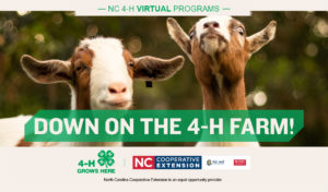Animal science ad with goats