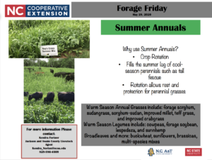 Forage Friday: Summer Annuals