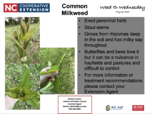 Milkweed: Weed ID Wednesday