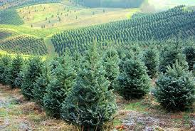 Cover photo for 2020 Virtual Christmas Tree Farm Tour