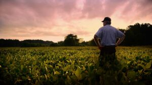 sunsetting upon a farmer and his field